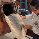Iniciamos las capacitaciones en curtición de piel de paiche y desarrollo de calzados, vestimenta y artículos de marroquinería